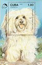 Cuba chose the Havanese to grace a 1992 souvenir issue postage stamp.